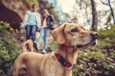 Bring your dog with you to these Palos Verdes Peninsula hiking trails
