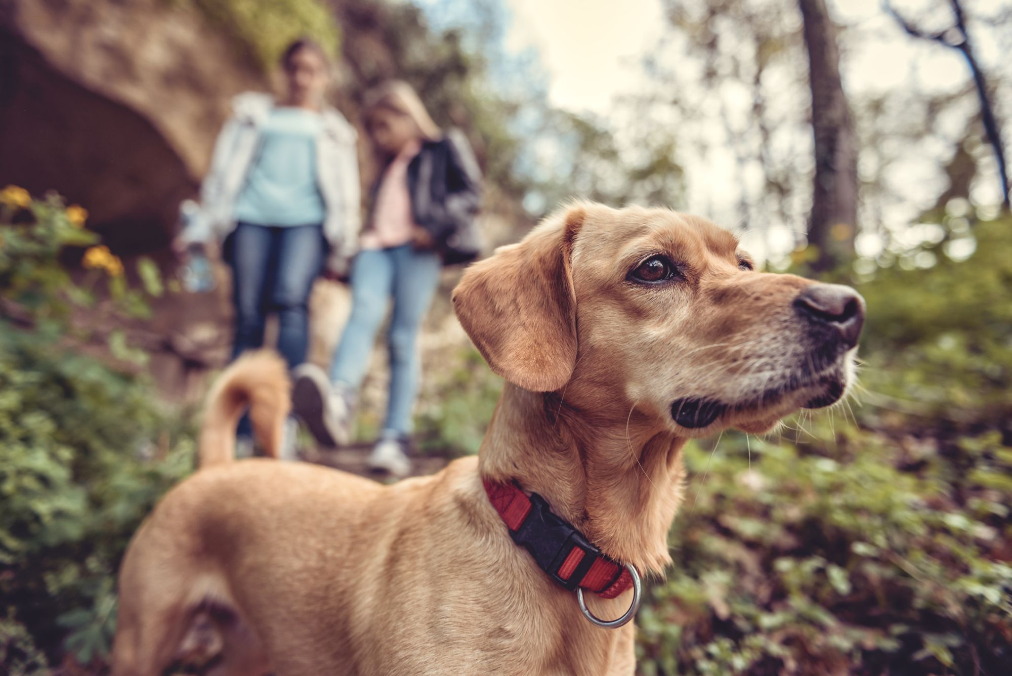 Cute dog on a hiking trail